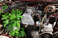 Albania. Gjirokastër. Cars scrapyard. Vegetation and an old rusty car's engine. Gjirokastër is a city in southern Albania. 23.05.2018 © 2018 Didier Ruef