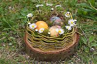 Mädchen, Kind baut ein Osternest aus Baumscheibe, Weidenästchen, Moos, Gänseblümchen und bunten Ostereiern; 6. Schritt: Fertiges Oster-Körbchen