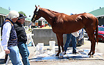 April 26, 2015 Kentucky Derby and Oaks workouts, Churchill Downs.  Dortmund arrives from California. Led by assistant trainer Jimmy Barnes. Owner Kaleem Shah, trrainer Bob Baffert.  By Big Brown x Our Josephina (Tale of the Cat) ©Mary M. Meek/ESW/CSM