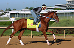 LOUISVILLE, KY - APRIL 24: Gun Runner (Candy Ride x Quiet Giant, by Giant's Causeway) exercises at Churchill Downs, Louisville KY. Owner Winchell Thoroughbreds LLC and Three Chimneys Farm, trainer Steven M. Asmussen. (Photo by Mary M. Meek/Eclipse Sportswire/Getty Images)