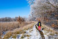 Frau wandert am Ufer des Göttiner Sees, Insel Töplitz, Werder/Havel, Potsdam-Mittelmark, Havelland, Brandenburg, Deutschland