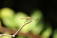 Beautiful dragonfly on the tip of a stem.
