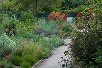 Path through Pollinator Garden at Gamble Garden a drought tolerant California-Style garden room;  Palo Alto, California