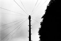 England. North West England. Greater Manchester. Manchester.  Telephone and electricity cables. Post and tree. © 1990 Didier Ruef