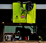 LOUISVILLE, KY - MAY 02: Nyquist, trained by Doug O'Neill and owned by Reddam Racing LLC, walks shed row after walking two miles during morning workouts for the Kentucky Derby and Kentucky Oaks at Churchill Downs on May 2, 2016 in Louisville, Kentucky. (photo by John Voorhees/Eclipse Sportswire/Getty Images)
