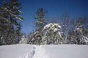 Pawtuckaway State Park - A hiker snowshoeing along North Mt Trail during the winter months in Nottingham, New Hampshire USA