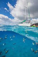 A woman kayaking over reef fish with a sailboat in the background, Leeward O'ahu