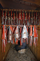 Red (sockeye) salmon (Oncorhynchus nerka) hangs in a smoke house at a fish camp on Six Mile Lake near Nondalton, Alaska, adjacent to Lake Clark National Park and Preserve, where the traditional subsistence ways of catching and preserving salmon as they return from the sea in mid July are still practiced today.  NOT FOR USE BY THE MINING INDUSTRY.