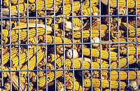 Dried corn cobs in storage.