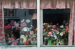 Plastic Flowers domestic window display. Chagford, Devon. UK. Nov 2012