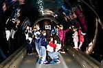 Oregon Coast Aquarium exhibit, U.S. Highway 101, Pacific Coast Scenic Byway, near Newport, Oregon.  Oregon Central Coast, beaches, bays, bars, family fun, winter storms, lighthouses, fishing boats, bluffs, fossils and beach walks.