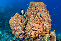 Diver with Barrel sponge, West Caicos, Turks & Caicos, Caribbean.