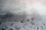 PIERRE HUYGHE<br /> <br /> L'Expédition scintillante, 2002, Acte 3, Untitled (Black Ice Stage)<br /> Patinoire de glace noire<br /> Lieu : Centre Pompidou<br /> Ville : Paris<br /> Le : 24/11/2013