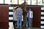 August 29, 2015. Smarty Jones Stakes winner Island Town in the paddock before winning the Grade III Smarty Jones Stakes, one mile and seventy yards, for three year olds at Parx racing in Bensalem, PA.  (Joan Fairman Kanes/ESW/CSM)