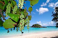 Trunk Bay, St John.Virgin Islands National Park