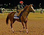 October 31, 2018 : Catalina Cruiser, trained by John Sadler, prepares for the Breeders' Cup Sprint at Churchill Downs on October 31, 2018 in Louisville, KY. Jessica Morgan/ESW/CSM