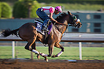 OCT 27 2014:Sweet Reason, trained by Leah Gyarmati, exercises in preparation for the Breeders' Cup Breeders' Cup Filly & Mare Sprint at Santa Anita Race Course in Arcadia, California on October 27, 2014. Kazushi Ishida/ESW/CSM