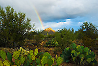 """SAGUARO RAINBOW""<br />