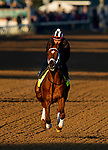 April 26, 2021: Dynamic One gallops in preparation for the Kentucky Derby at Churchill Downs in Louisville, Kentucky on April 26, 2021. EversEclipse Sportswire/CSM