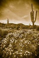 Sepia Spring - Arizona