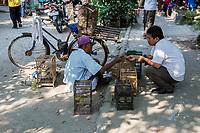 Yogyakarta, Java, Indonesia.  Bird Market.