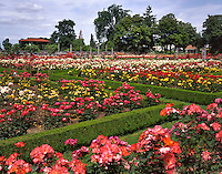 Rose Garden in Peninsula Park in Portland Oregon