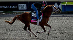 January 24, 2020: Channel Cat gallops as horses prepare for the Pegasus World Cup Invitational at Gulfstream Park Race Track in Hallandale Beach, Florida. John Voorhees/Eclipse Sportswire/CSM