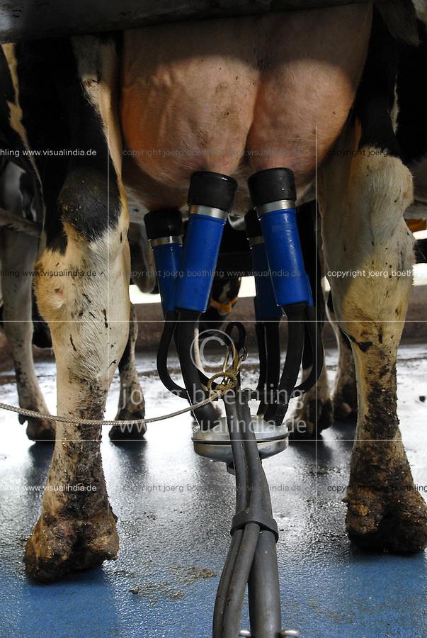 HOLLAND NETHERLAND milk cow farm, milking / Niederlande Milchviehbetrieb, Melkstand