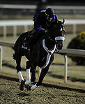 4 November 2010:  Mad Flatter, trained by Jeff Thornbury and to be ridden by jockey Jon Court, during work outs for the 2010 Breeders Cup at Churchill Downs in Louisville, Kentucky.(Scott Serio/Eclipse Sportswire)
