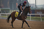 DUBAI,UNITED ARAB EMIRATES-MARCH 23: Deauville,trained by Aidan O'Brien,exercises in preparation for the Dubai Turf at Meydan Racecourse on March 23,2017 in Dubai,United Arab Emirates (Photo by Kaz Ishida/Eclipse Sportswire/Getty Images)