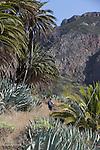 barranco de Benchijigua dominé par le roque de Agando. barranco of  Benchijigua.