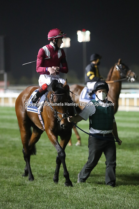 March 27, 2021: MISHRIFF (IRE) #7, in the post parade for the Dubai Sheema Classic on Dubai World Cup Day, Meydan Racecourse, Dubai, UAE. Shamela Hanley/Eclipse Sportswire/CSM