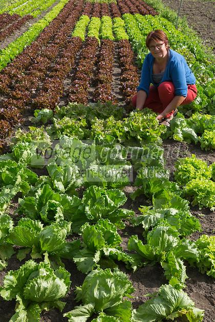 Belgique, Flandre-Occidentale, Env de Bruges, Oedelem:  De Akker Hogen , maraîchage biologique à Oedelem, près de Bruges. // Belgium, Western Flanders, Bruges, De Akker Hogen, organic gardening in Oedelem, near Bruges.