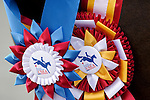 Winners from the young horse events at Fair Hill International in Fair Hill, MD  on 10/14/11.  (Ryan Lasek / Eclipse Sportwire)