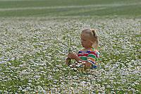 Mädchen, Kind pflückt Blumenstrauß in Kamillenfeld, Blumenpflücken, Geruchslose Kamille, Tripleurospermum perforatum, Tripleurospermum inodorum, Matricaria inodora, Scentless False Chamomile