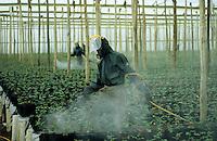 TANSANIA, Anbau von fair trade Schnittblumen Rosen in Gewaechshaus fuer Export nach Europa bei Firma Kiliflora nahe Arusha, Verspruehen von Pflanzenschutzmitteln mit Schutzkleidung - TANZANIA Arusha, rose cut flower cultivation in green house at fair trade company Kiliflora for export to Europe, spraying of pesticides with protection clothes