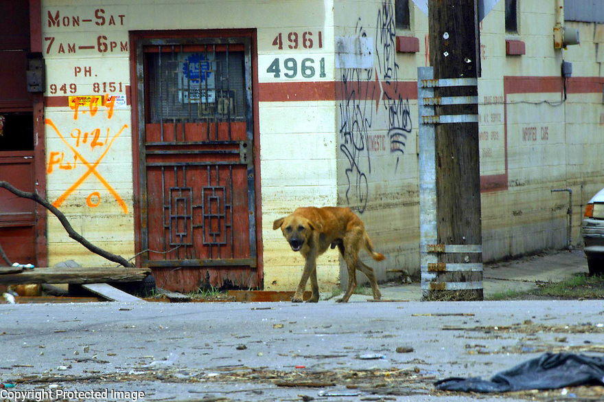 Hungry dog in the Lower Ninth Ward after Katrina