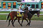 NEW ORLEANS, LA - FEBRUARY 20:<br /> Bistraya #4, ridden by Edwin A Maldonado in the Risen Star Stakes post parade for the Louisiana Derby Preview Race Day at Fairgrounds Race Course on February 20,2016 in New Orleans, Louisiana. (Photo by Steve Dalmado/Eclipse Sportswire/Getty Images)