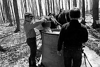 Undated file photo from the 1970's -  Montreal. Quebec , Canada  - (Maple syrup) Sugar shack (Cabane a sucre)