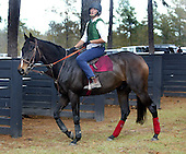 Britt Graham and Flat Top at Colonial Cup races 2003.