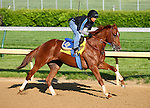 29 April 2010: Line of David gallops at Churchill Downs, Louisville, KY.