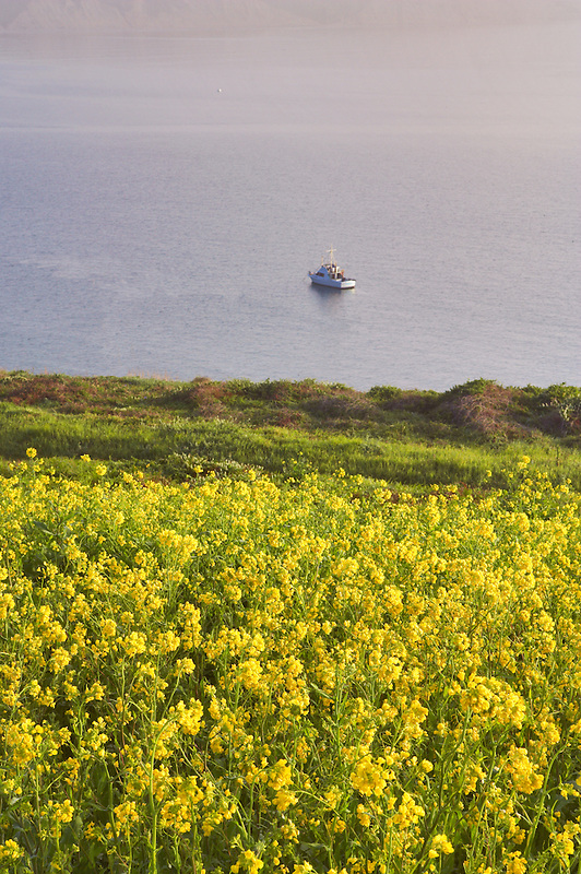 Calm water  wildflowers and boat on Drakes Bay. Point Reyes National Seashore. California