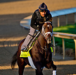 LOUISVILLE, KY - APRIL 30: Noble Indy, trained by Todd Pletcher, exercises in preparation for the Kentucky Derby at Churchill Downs on April 30, 2018 in Louisville, Kentucky. (Photo by John Voorhees/Eclipse Sportswire/Getty Images)