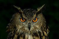 Berwick Birds of Prey