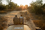 African Lion (Panthera leo) trackers, Timbo Frackson and Christopher Muduwa looking for tracks during transect, Kafue National Park, Zambia