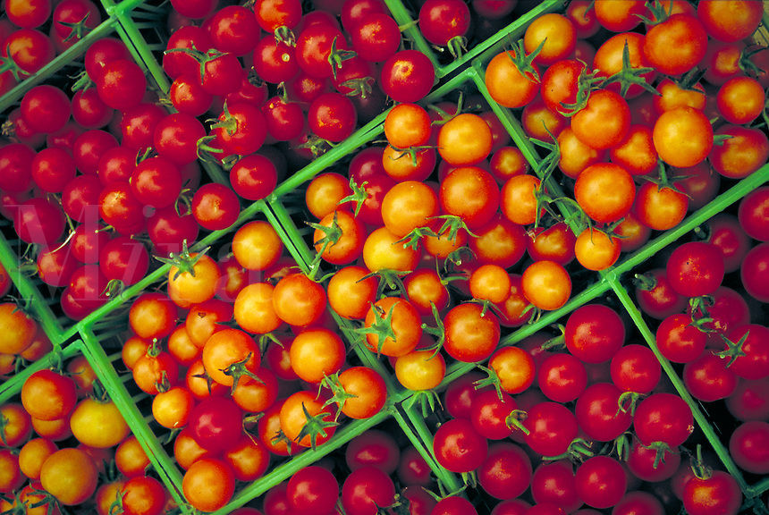 Freshly picked and packed summer cherry tomatoes in green plastic baskets.