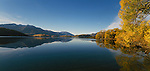 Autumn trees at Glendhu Bay at Lake Wanaka. Otago  New Zealand.