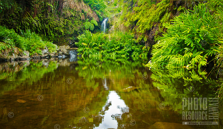 A lush green forest and waterfall above Hi'ilawe Falls in Waipi'o Valley on the Big Island.