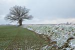 Europa, DEU, Deutschland, Bayern, Oberbayern, Guenzelhofen, Landkreis Fuerstenfeldbruck, Schnee, WInter, Typische Landschaft, Natur, Umwelt, Landschaft, Jahreszeiten, Stimmungen, Landschaftsfotografie, Landschaften, Landschaftsphoto, Landschaftsphotographie, Wetter, Wetterelemente, Wetterlage, Wetterkunde, Witterung, Witterungsbedingungen, Wettererscheinungen, Meteorologie, Wettervorhersage, <br /> <br /> [Fuer die Nutzung gelten die jeweils gueltigen Allgemeinen Liefer-und Geschaeftsbedingungen. Nutzung nur gegen Verwendungsmeldung und Nachweis. Download der AGB unter http://www.image-box.com oder werden auf Anfrage zugesendet. Freigabe ist vorher erforderlich. Jede Nutzung des Fotos ist honorarpflichtig gemaess derzeit gueltiger MFM Liste - Kontakt, Uwe Schmid-Fotografie, Duisburg, Tel. (+49).2065.677997, ..archiv@image-box.com, www.image-box.com]