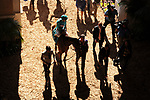 DEL MAR, CA - NOVEMBER 04: Lady Eli #9, ridden by Irad Ortiz Jr., heads to the track for the Breeders' Cup Filly and Mare Turf race on Day 2 of the 2017 Breeders' Cup World Championships at Del Mar Racing Club on November 4, 2017 in Del Mar, California. (Photo by Carson Denis/Eclipse Sportswire/Breeders Cup)